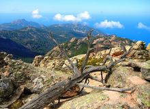 Dead tree in the mountains by the sea royalty free stock photo