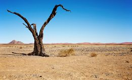 Dead tree in Namib Desert Stock Images