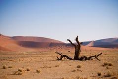 Dead tree in Namibian desert royalty free stock photo