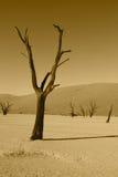 Dead tree in Namibian desert. Dead tree in Deadvlei in the Namibian desert in Africa Royalty Free Stock Photo