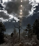 Dead tree with natural flare Stock Photos