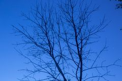 Dead tree in the night sky royalty free stock image