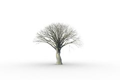 Dead tree with no leaves Stock Image
