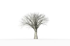 Dead tree with no leaves Royalty Free Stock Photography