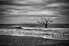 Dead Tree in the Ocean. Oak tree on the shore at Botany Bay Beach on Edisto Island, South Carolina Royalty Free Stock Image