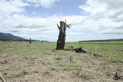 Dead Tree On Cracked Earth Stock Photography