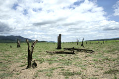 Dead Tree On Dry Land Stock Photos