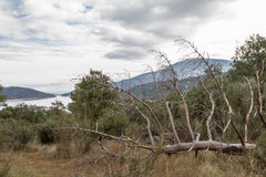 Dead Tree. One dead and fallen tree in a forest near a lake Royalty Free Stock Photos