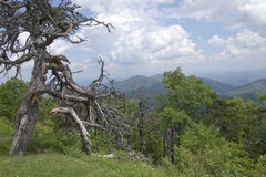 Dead Tree Overlooks the Lush Appalachian Mountains Royalty Free Stock Photography