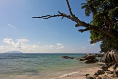 Dead tree in paradise. Wide angle shot of an old takamaka tree reaching into the blue skies of Beau Vallon Bay, Mahe island, Seychelles, with its impressive Stock Images