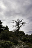 Dead tree, Parnitha Greece Stock Image
