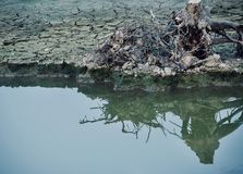 A dead tree parts with its reflection on the water photograph royalty free stock photo