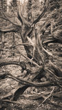 Dead tree patterns Royalty Free Stock Photography