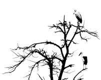 Dead tree and perican Royalty Free Stock Image