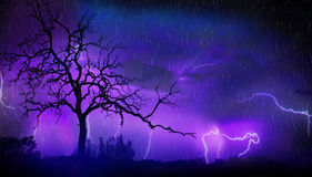 Dead tree and lightning. Dead tree during rainy storm with thunder and lightning in background stock image