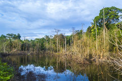 Dead tree reflection. Reflection of dead tree with cloudy scene at tropical forest Royalty Free Stock Photo