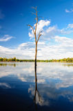 Dead tree reflection in water Royalty Free Stock Photo