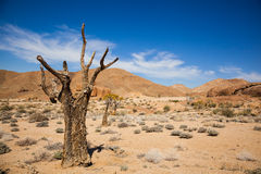 Dead tree in Richtersveld Stock Photo