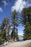 Dead Tree on the Rim of Crater Lake Royalty Free Stock Images