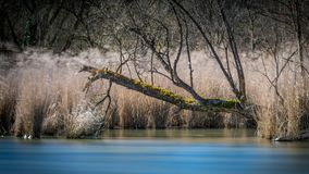 Dead Tree By The River royalty free stock photography