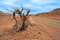 Dead tree on roadside in desert. Royalty Free Stock Images