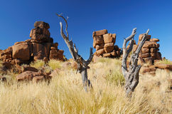 Dead Tree and Rock Formations Stock Photography