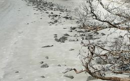 Dead Tree and Rocks on Beach. A dead tree and rocks are strewn on St. Andrews Beach on the barrier island of Jekyll Island, Georgia, about a month after Tropical stock image