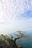 Dead tree on the rocky shore of the Black Sea Stock Image