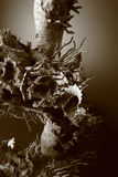 Dead tree root Stock Photography