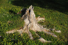 Dead tree root Stock Photo