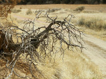 Dead tree roots. A big dead tree root sticking out of the side of a hill Stock Image