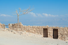 Dead tree on the ruins of Masada Stock Images