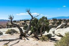 Dead tree in San Rafael Swell, Utah Stock Image