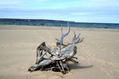Dead tree on sand Stock Photos