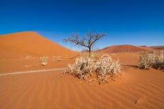 Dead tree between sand dunes Stock Photography