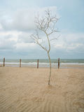 Dead tree. Sand pattern and dead tree on sand beach Royalty Free Stock Photo