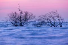 Dead tree in the sea Stock Photo