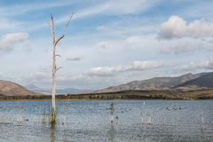 Dead Tree, Sea Gulls and Mountains at Otay Lakes Royalty Free Stock Images