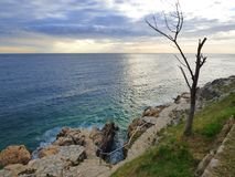 Dead tree by the sea shore, Rovinj, Croatia royalty free stock photos