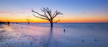 Dead tree seascape panorama. A sunrise of the unique bare trees that are in the atlantic ocean Stock Image