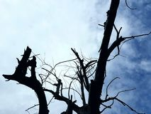 The dead tree. The shadow of dead tree in the sky Stock Photo