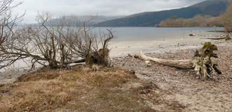 Dead tree on a shore Stock Photography