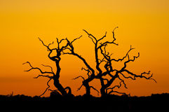 Tree silhouette. Silhouette of a tree, with a deep orange sunset sky in the background Stock Image
