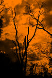 Dead tree on silhouette Backgroun Royalty Free Stock Photography