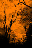 Dead tree on silhouette Backgroun Royalty Free Stock Images