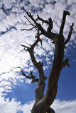 Dead tree silhouette on blue sky and clouds Royalty Free Stock Images