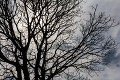 Dead tree Silhouette Stock Photos