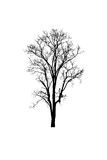 Dead tree silhouette. dry tree without leafs isolated on w Stock Photos