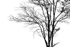 Dead tree silhouette. Royalty Free Stock Image