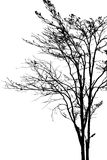 Dead tree silhouette. Stock Photos